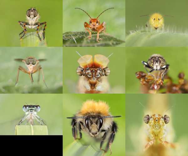 Insecten Van Voren